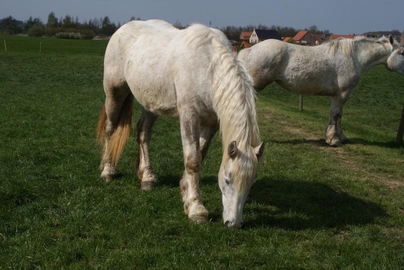 """les chevaux du centre equestre """" autre que les miens """" Dsc01219"""