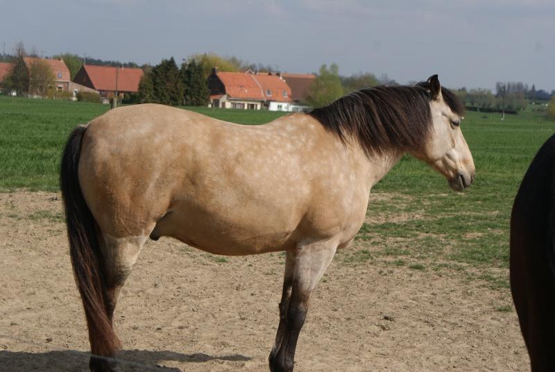 """les chevaux du centre equestre """" autre que les miens """" Dsc01222"""