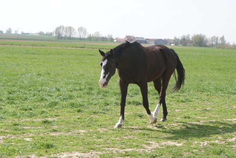 """les chevaux du centre equestre """" autre que les miens """" Dsc01223"""