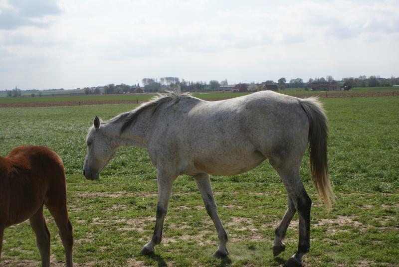 """les chevaux du centre equestre """" autre que les miens """" Dsc01224"""