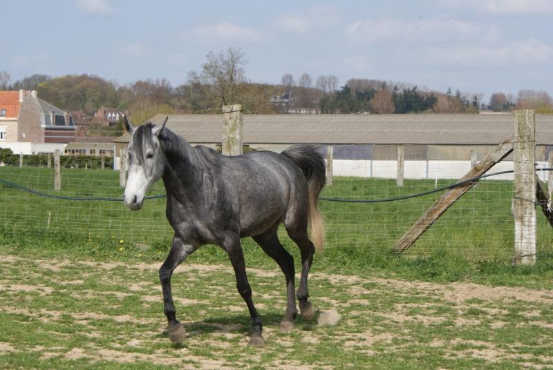 """les chevaux du centre equestre """" autre que les miens """" Dsc01225"""