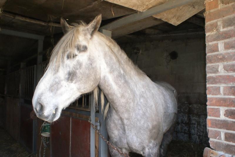 """les chevaux du centre equestre """" autre que les miens """" Dsc01226"""