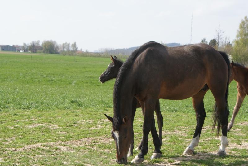 """les chevaux du centre equestre """" autre que les miens """" Dsc01227"""