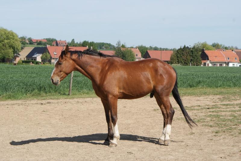 """les chevaux du centre equestre """" autre que les miens """" Dsc01517"""