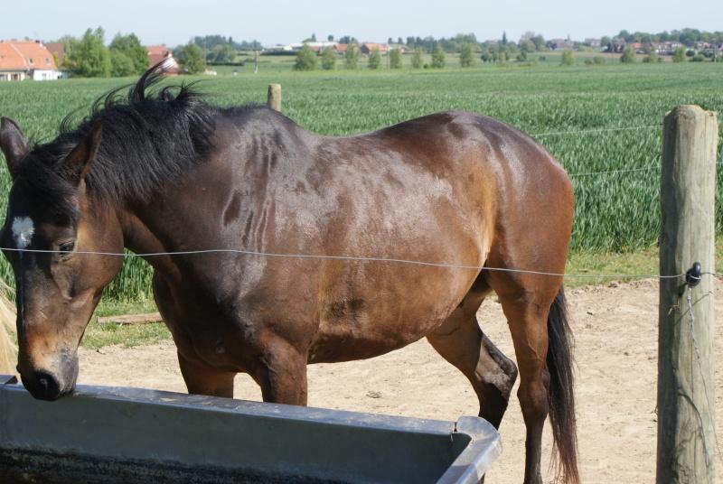"""les chevaux du centre equestre """" autre que les miens """" Dsc01518"""
