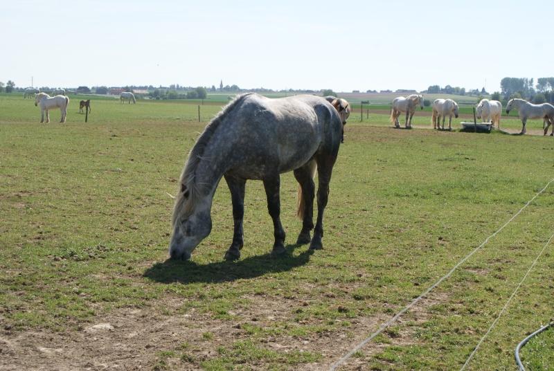 """les chevaux du centre equestre """" autre que les miens """" Dsc01520"""
