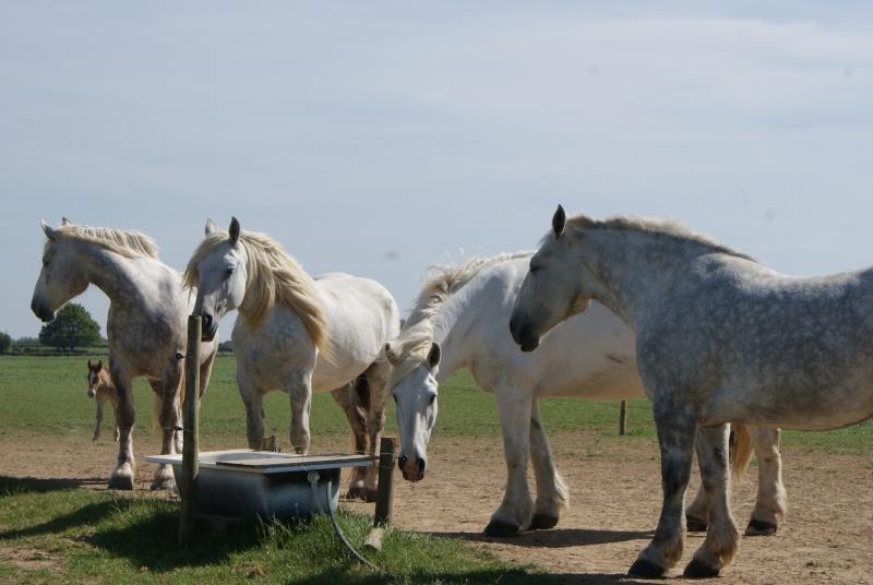 """les chevaux du centre equestre """" autre que les miens """" Dsc01521"""