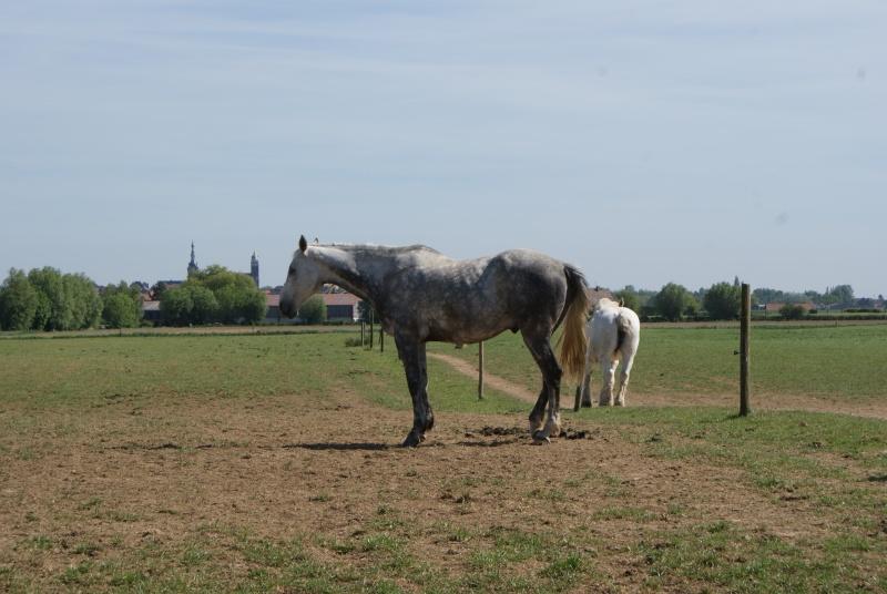 """les chevaux du centre equestre """" autre que les miens """" Dsc01522"""
