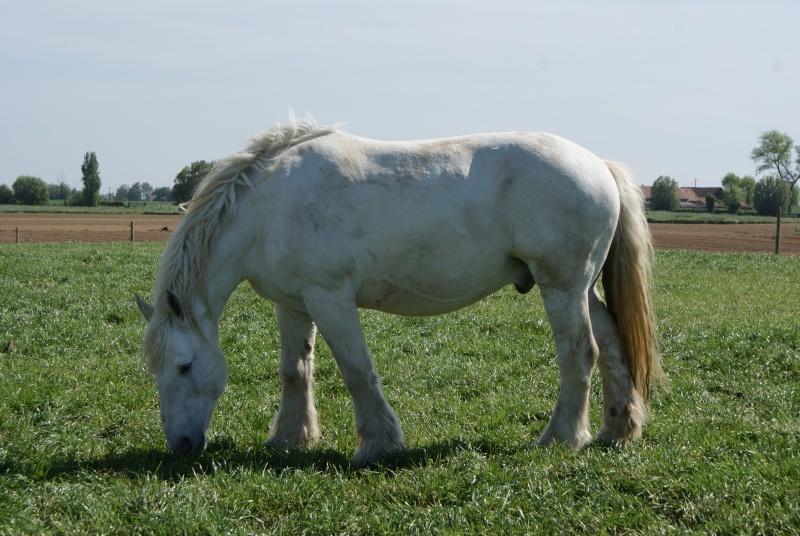 """les chevaux du centre equestre """" autre que les miens """" Dsc01610"""