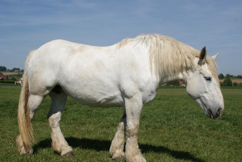 """les chevaux du centre equestre """" autre que les miens """" Dsc01611"""