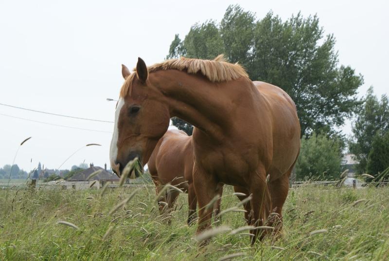Vos plus belles grimaces de cheval et photos gag .... - Page 5 Samedi28