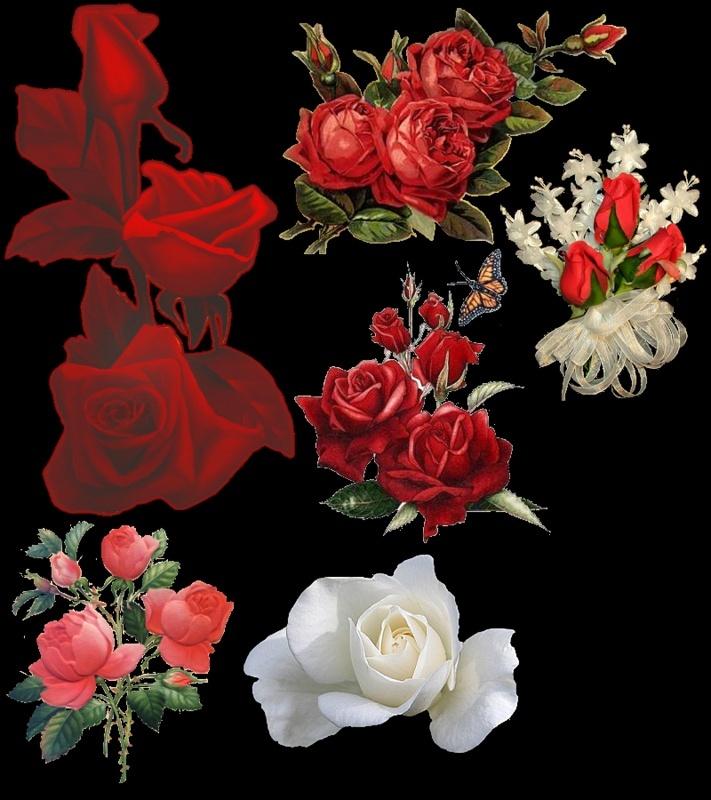 fleurs - Page 4 9ai75n10
