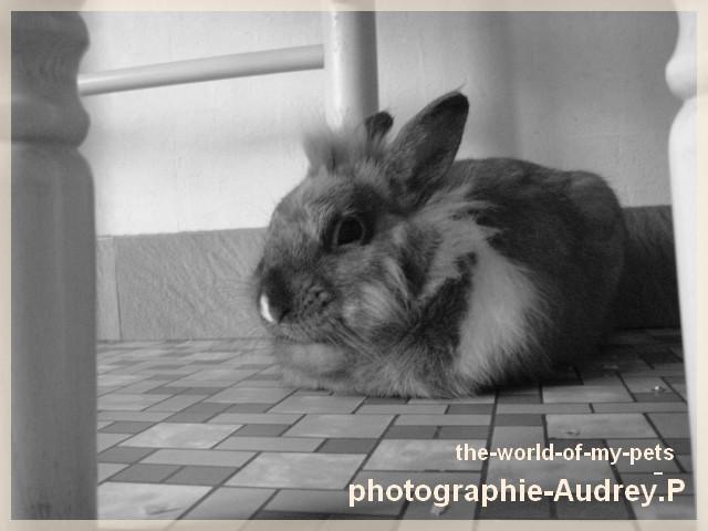 Album photos de Audrey-0903 Modif_12
