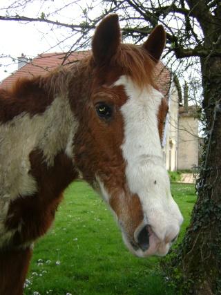 WALANIE (VANILLE) - ONC poney - adoptée en avril 2011 par voulk  - Page 3 04611