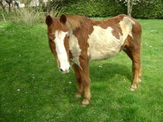 WALANIE (VANILLE) - ONC poney - adoptée en avril 2011 par voulk  - Page 3 04810