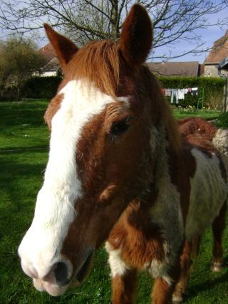 WALANIE (VANILLE) - ONC poney - adoptée en avril 2011 par voulk  - Page 3 05711
