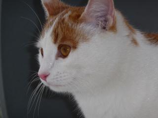 Je vous présente mon chat Sachat P1000211