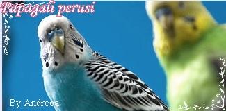 ~*~My GFX~*~ Perus110