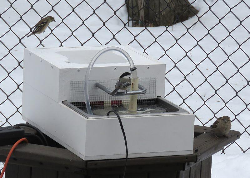 Bain d'oiseaux chauffant et ampoule brûlée 10-03-10
