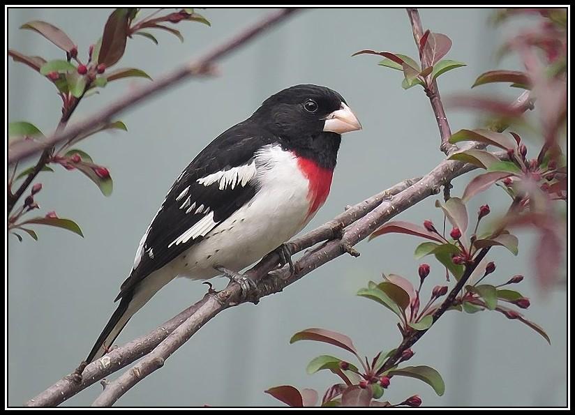 Les oiseaux aussi aiment les fleurs... 15-05-10