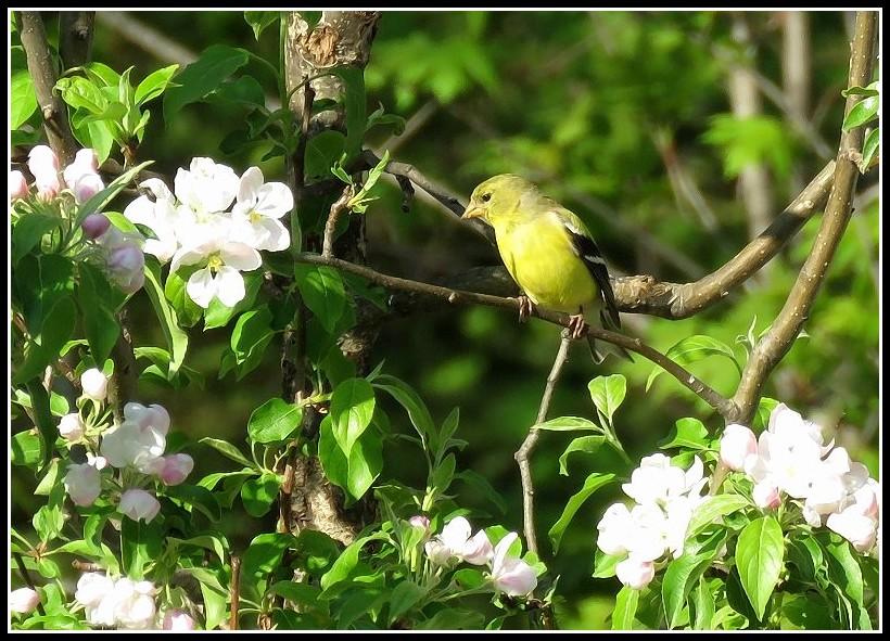 Les oiseaux aussi aiment les fleurs... 17-05-10