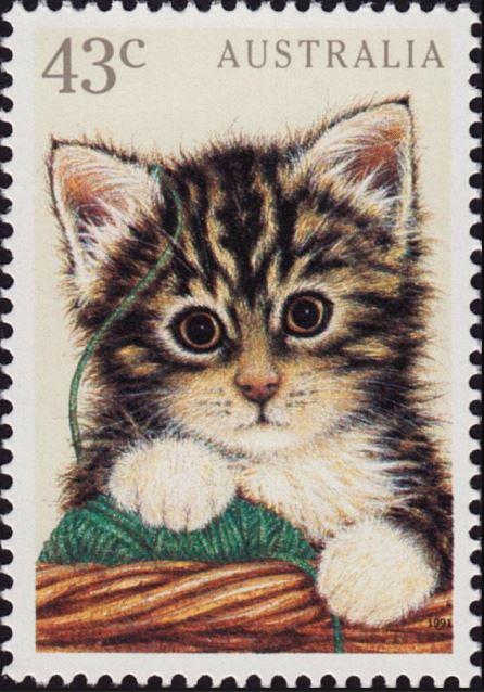 Katzen Austra10
