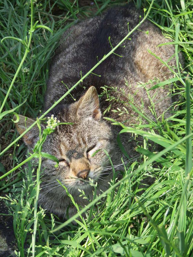 PATAPOUF mâle tigré 7 ans Img_2410