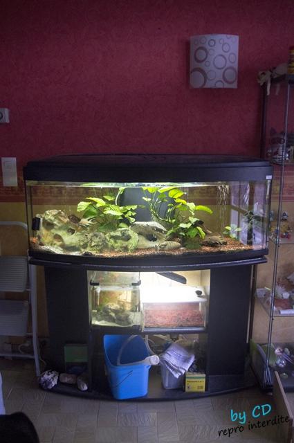 quels poissons pour mon 120L Imgp9210