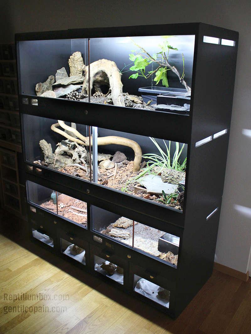 Mes Installations de chez ReptiliumBox Img_2611