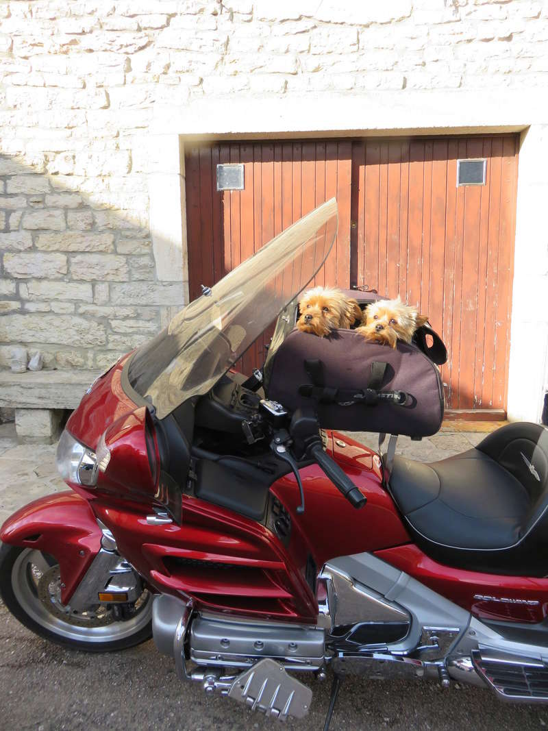 Transport Chien et Goldwing - Page 2 Img_0121