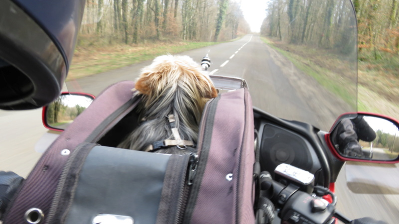 Transport Chien et Goldwing - Page 2 Img_0123
