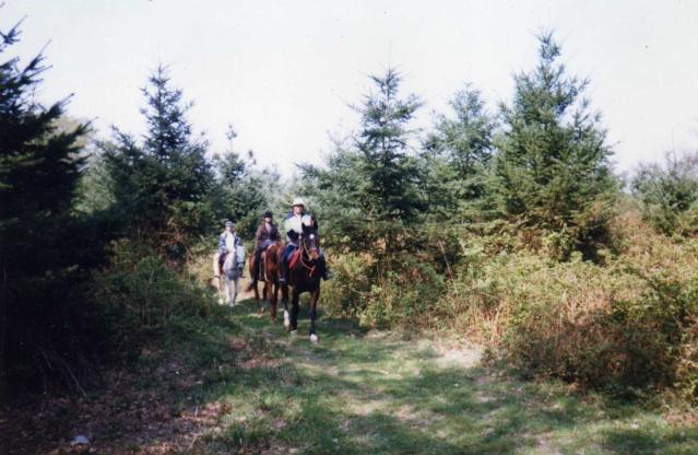 Les chevaux de coeur Img42710