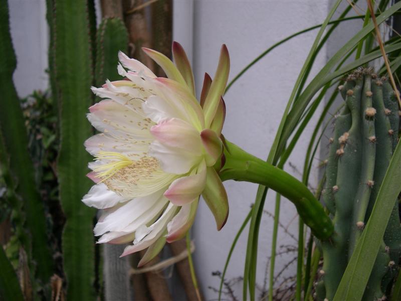 fleurs de cactus! - Page 2 Dscn4727