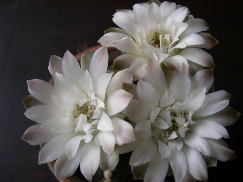 La fleur d'aujourd'hui... - Page 11 Dscn4734