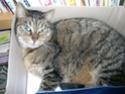 la chatte de la maison........... Dscn5222