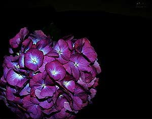 what flower are you? Im00710