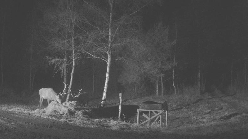 Red Deer Cam (Saarema Island)  - Page 32 Vlcsna16