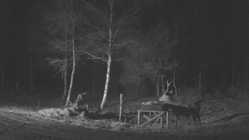 Red Deer Cam (Saarema Island)  - Page 33 Vlcsna19