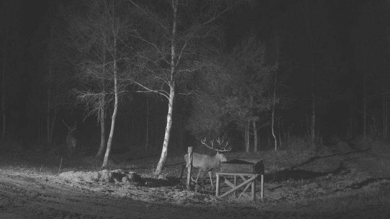 Red Deer Cam (Saarema Island)  - Page 33 Vlcsna23
