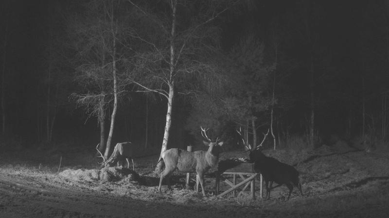 Red Deer Cam (Saarema Island)  - Page 33 Vlcsna24