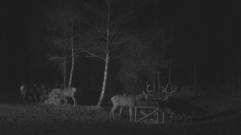 Red Deer Cam (Saarema Island)  - Page 33 Vlcsna43