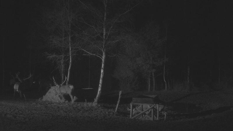 Red Deer Cam (Saarema Island)  - Page 33 Vlcsna44