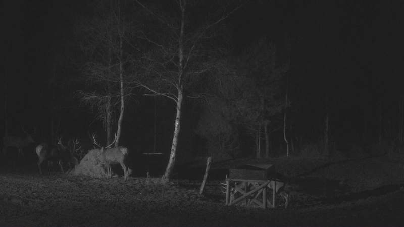 Red Deer Cam (Saarema Island)  - Page 33 Vlcsna45