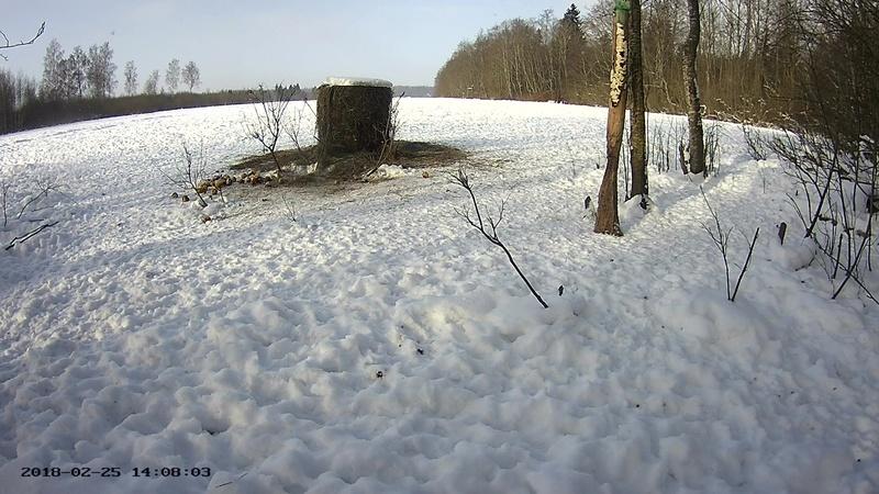 Roe deer cam in Viljandimaa Vlcsna62