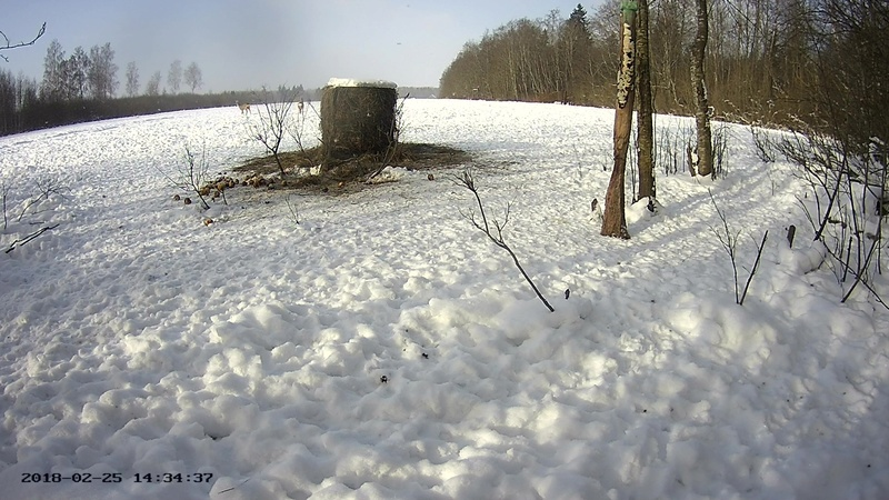 Roe deer cam in Viljandimaa Vlcsna69
