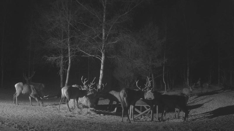 Red Deer Cam (Saarema Island)  - Page 33 Vlcsna78
