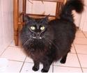 Comment administrer un plâtre gastrique à mon chat ? Pic_0315