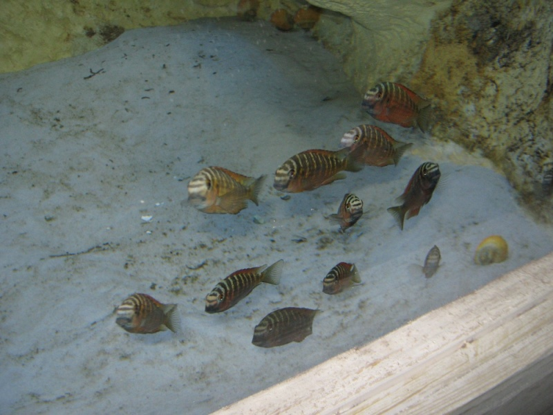 Première fish-room en bois :) Img_0711