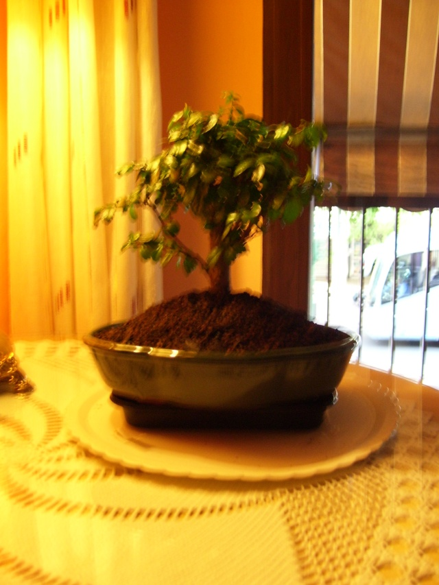 Mi arce y carmona :D:D 10008315