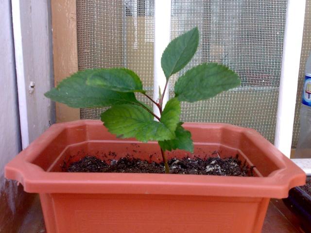 Me gustaría crear un bonsai 18052010